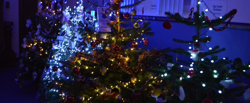 Christmas Tree Festival Launch
